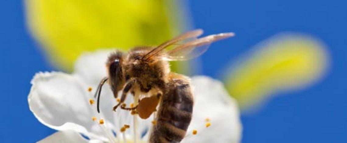 Estudio estratégico de la cadena apícola de Chile