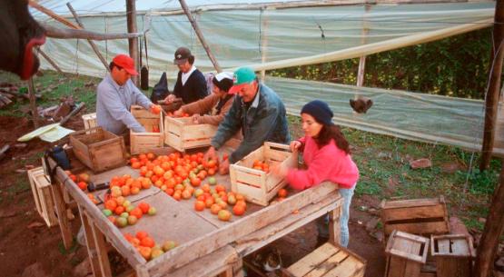 Catastros frutícolas de las regiones de Atacama, Coquimbo y O'Higgins desde una perspectiva de género. Diciembre de 2015