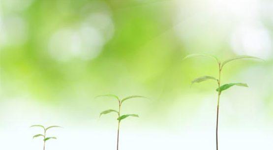 Estudio: Actualización de la Comercialización de Plantas Frutales, Vides y Plantines de Hortalizas en Chile