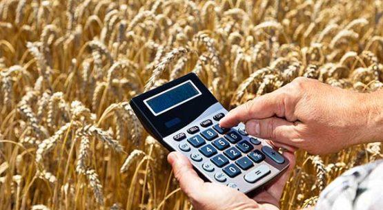 Temporada agrícola de trigo
