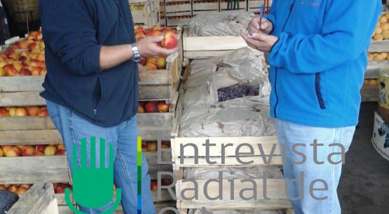 En la entrevista radial de Odepa, los reporteros de mercado de Chillán