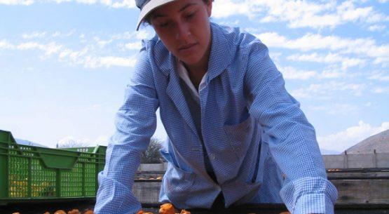 Estudio desafíos de políticas sectoriales para una agricultura competitiva y sostenible al año 2030 – Visión desde las regiones.
