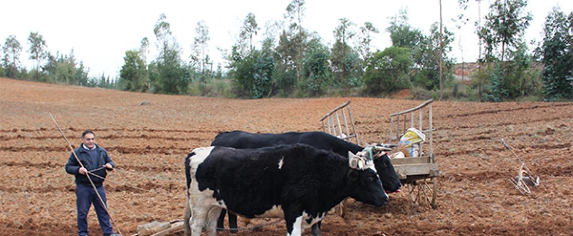 Coyuntura Internacional III – Proyección internacional de la Agricultura Familiar Campesina