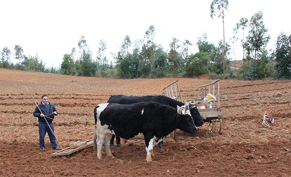Agricultura familiar campesina
