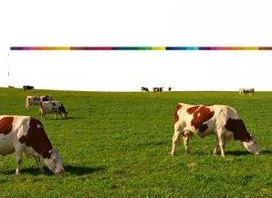 Foto Comisión carne bovina para carrusel 5.5.17