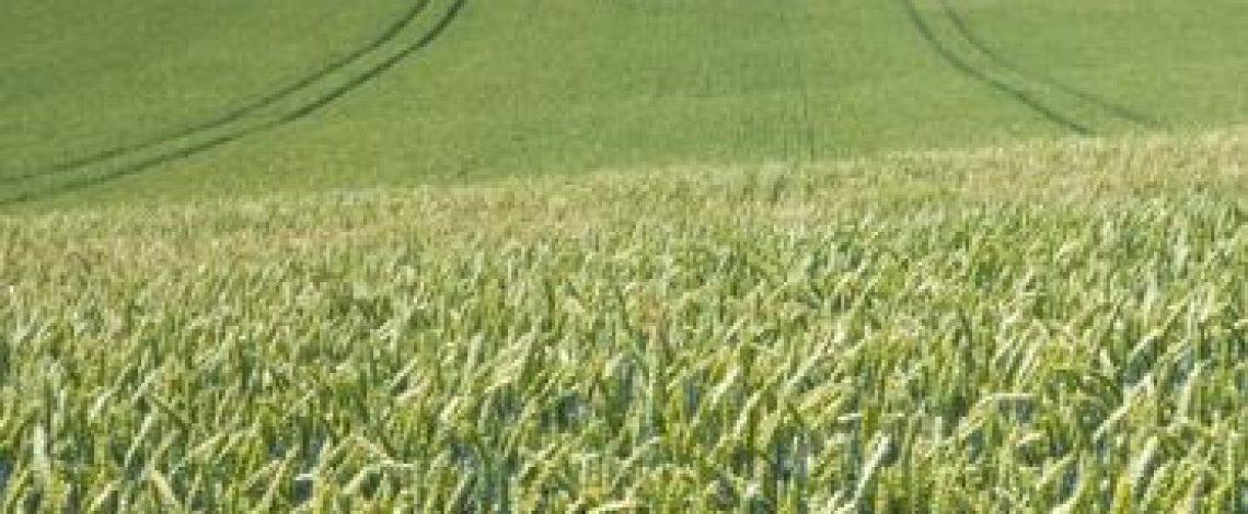 Matriz de labores agrícolas para cultivos anuales, hortalizas y frutales por macro regiones, elaborada por Odepa