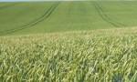 Foto calendario agricola para Carrusel 17.05.17