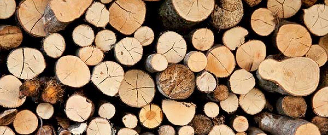 Caracterización de la cadena de producción y comercialización de la industria forestal: estructura, agentes y prácticas