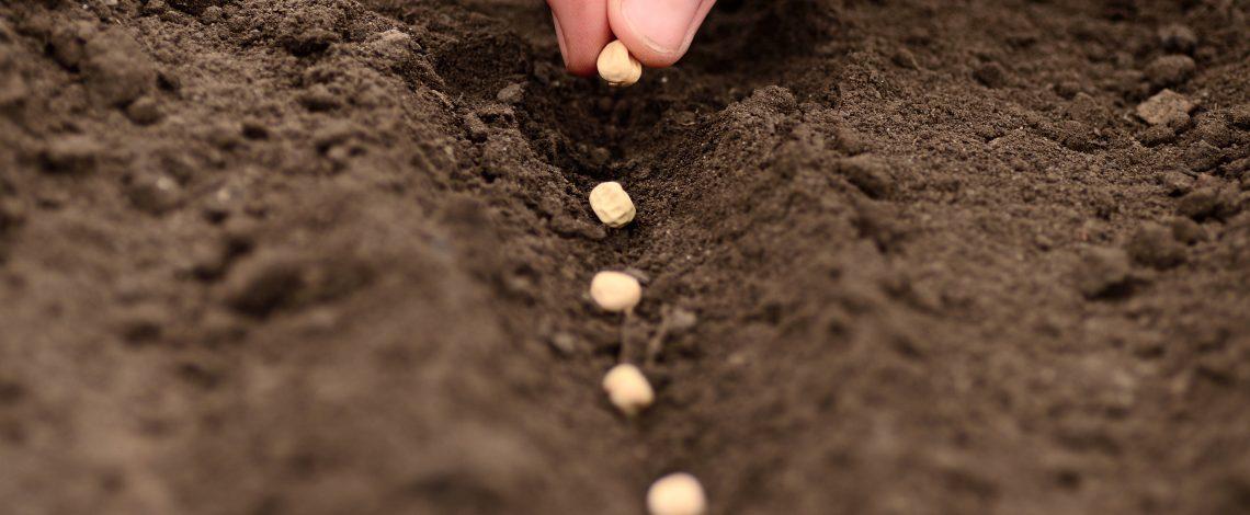 Estudio de intenciones de siembra de cultivos anuales
