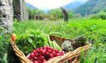 Cultivo de agricultura orgánica