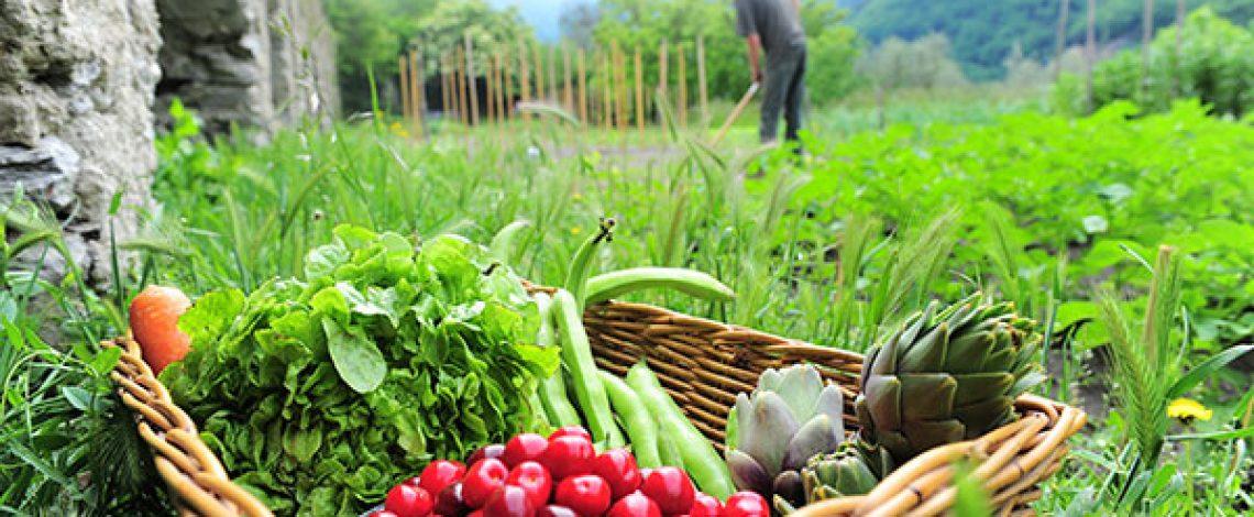 Información hortícola (Publicación especial) 2008-2009