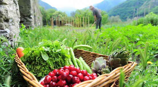 Agricultura orgánica: agosto de 2017