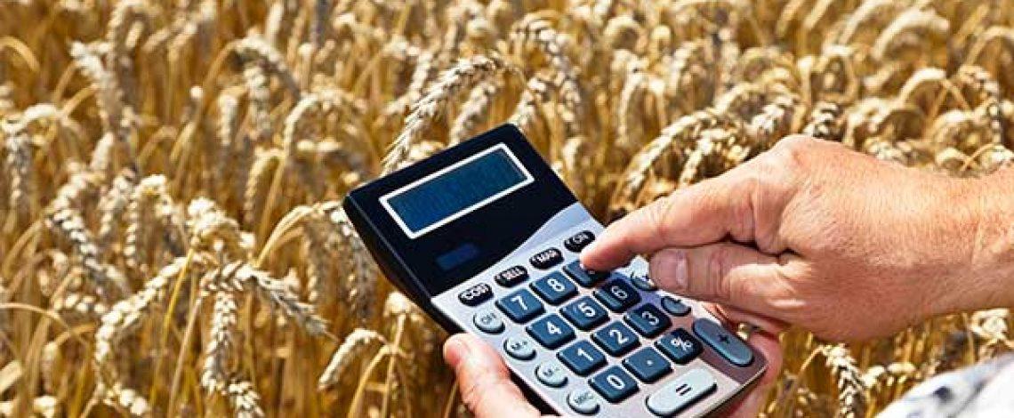 Avance de la campaña de trigo 2018/19