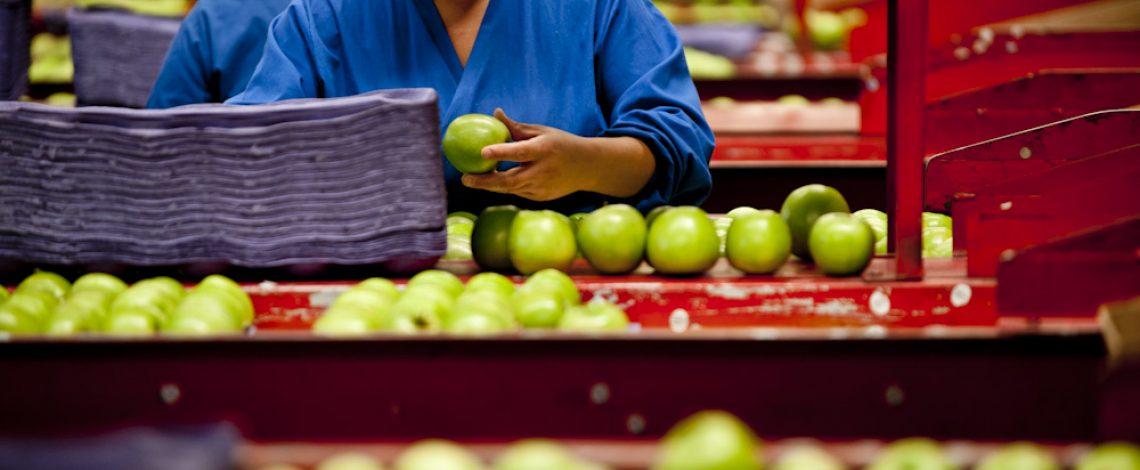 Visión perspectiva del sector frutícola chileno