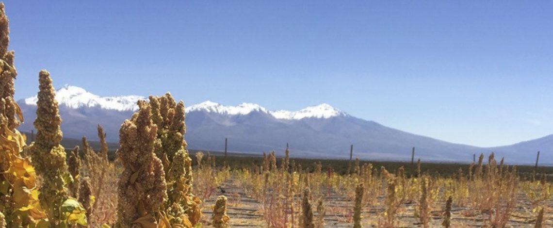 Estudio de la situación actual de la cadena comercial de la quínoa en la región de Tarapacá