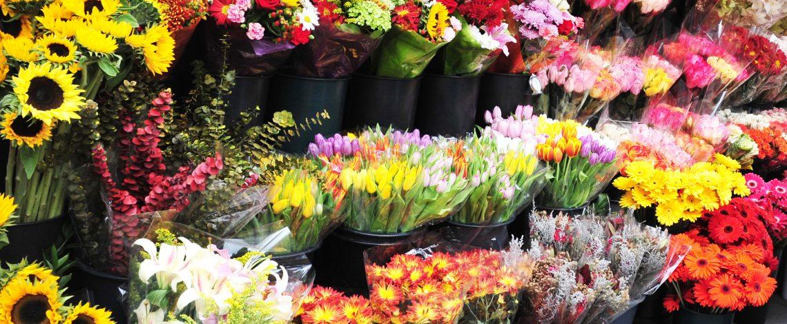 Boletines de flores históricos