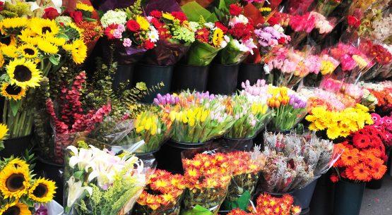 Boletín de flores