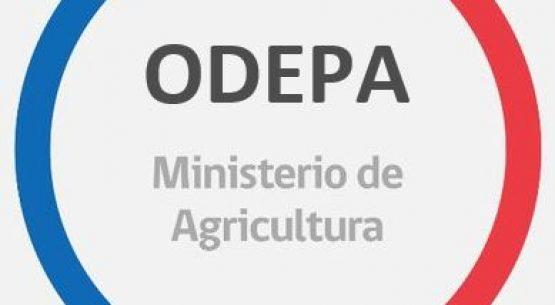 Lista de concursos de Indap para la agricultura familiar campesina