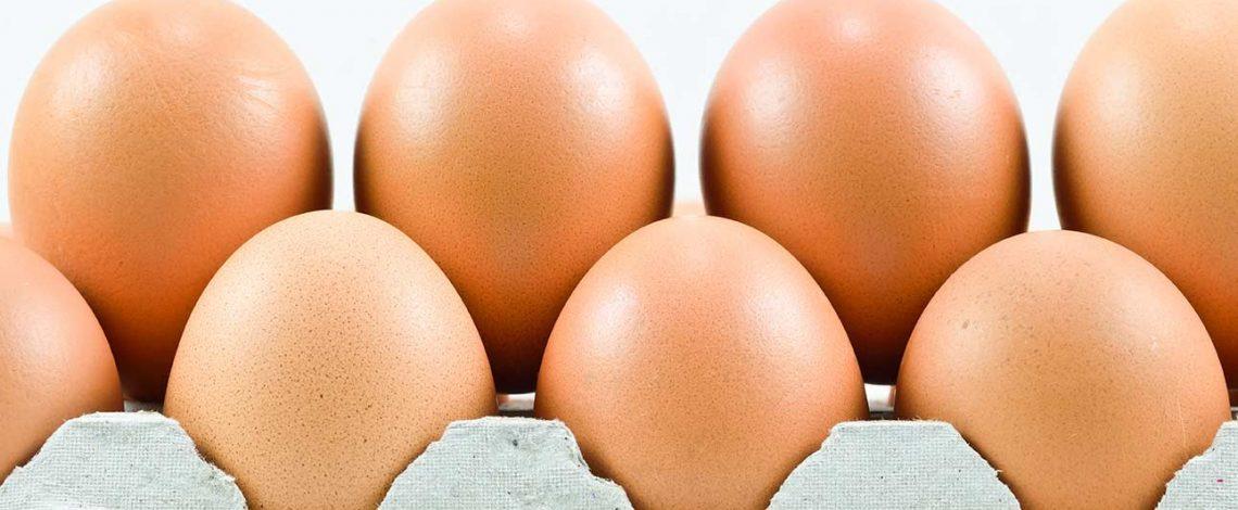 Panorama y mercado del huevo