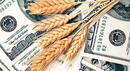 Precios futuros y fob golfo de trigo y maíz