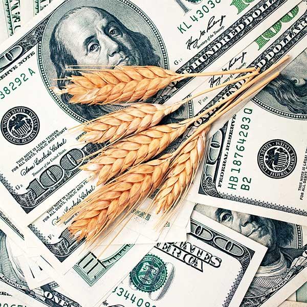 trigo y dólares