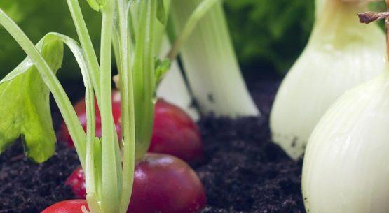 Agricultura orgánica: oportunidades y desafíos