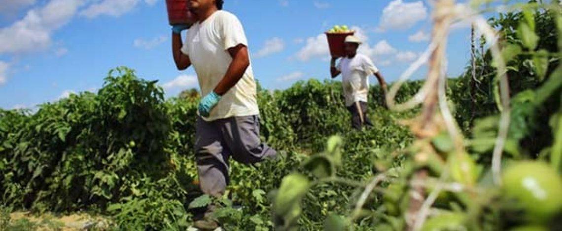 En marzo de 2003, la variación de ocupados en la economía y en la agricultura fue la mayor desde igual mes de 1997