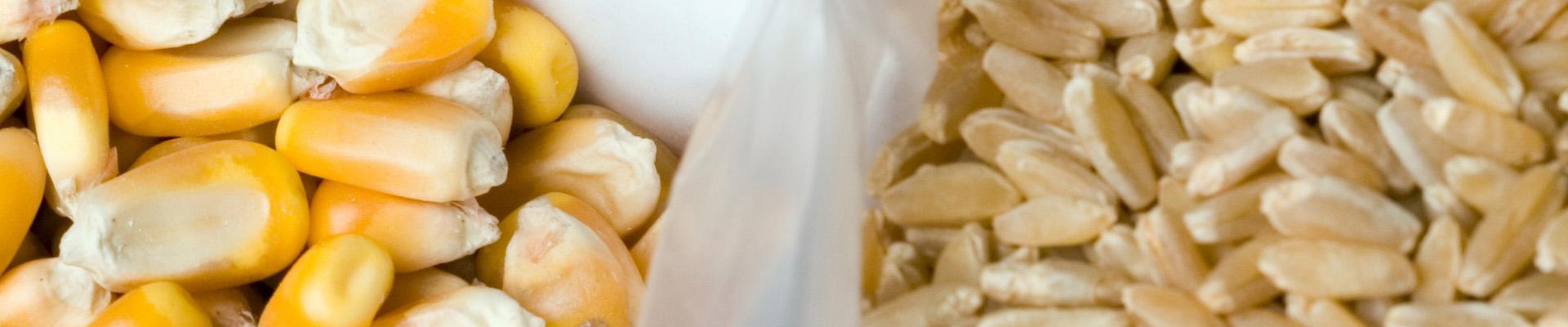 Boletín de cereales, octubre 2021