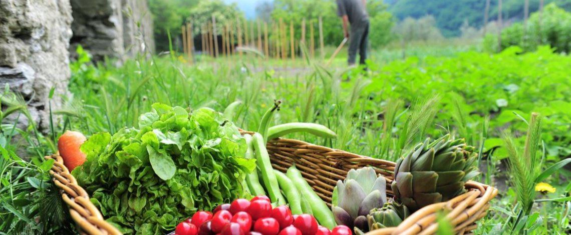 Las exportaciones de hortalizas frescas, en valor, aumentaron en 23,4% en enero-agosto de 2019