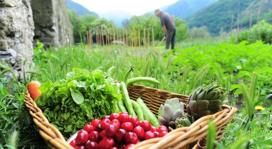 Mercados Agropecuarios 2012