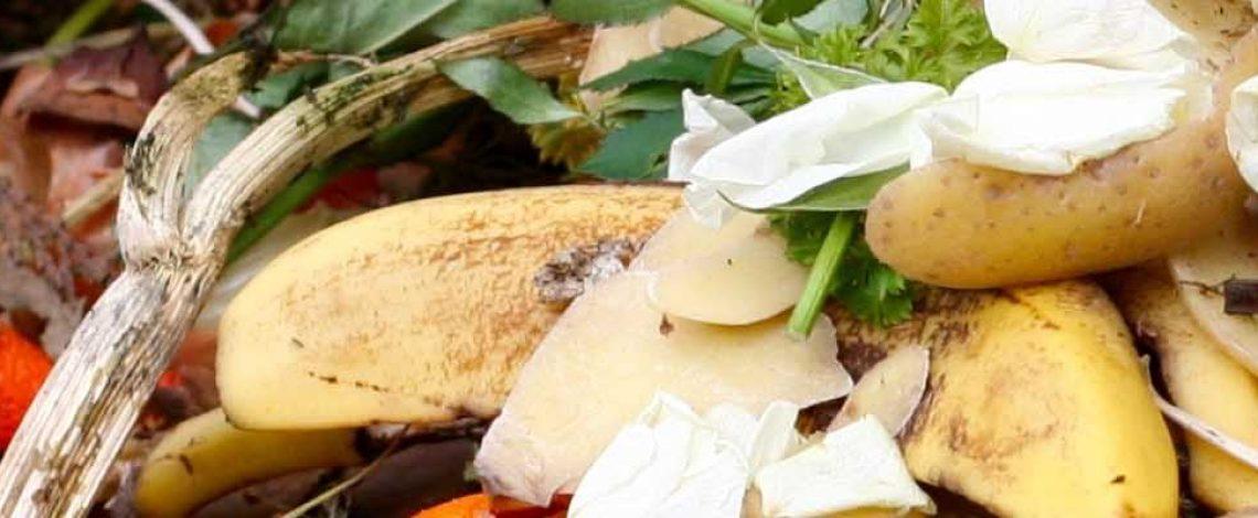 Pérdida y desperdicio de alimentos en el sector agrícola: avances y desafíos. Febrero de 2019