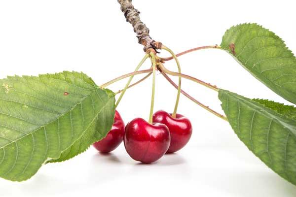 Fotografía de cerezas