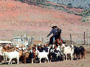 Ficha regional de Atacama