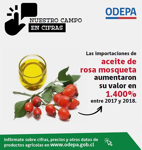 Infografía de aceite de rosa mosqueta - 2019