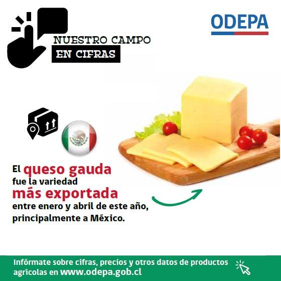 Nuestro campo en cifras - exportaciones de queso gauda - 2019