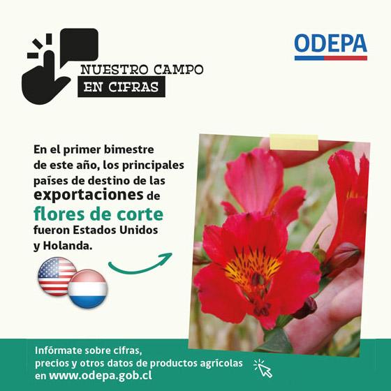 Infografía exportaciones de Flores - 2019