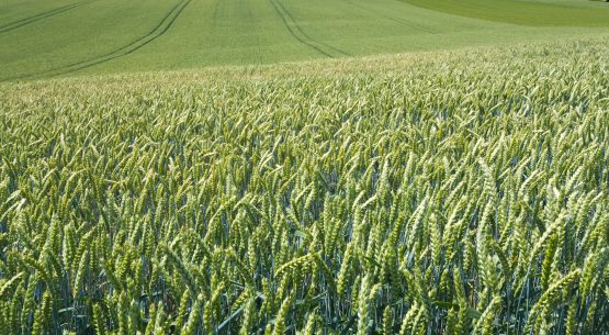 Productividad del sector agrícola: una mirada global