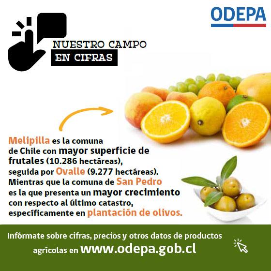 Nuestro campo en cifras - superficie de frutales en Chile - julio 2019