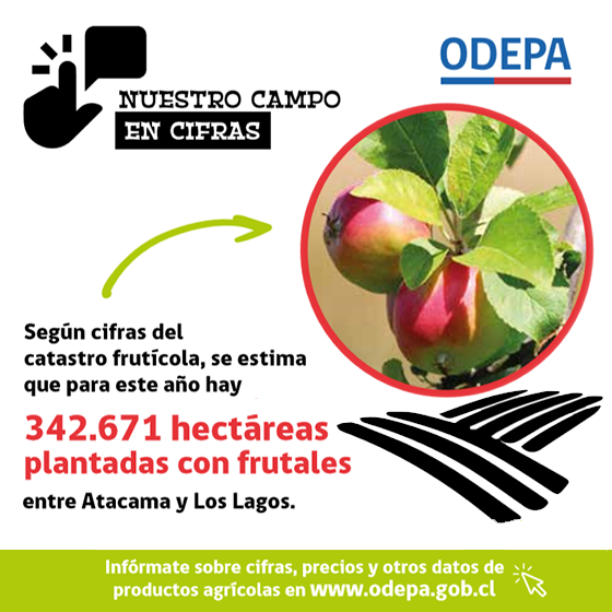 Infografía Catastro frutícola 2019