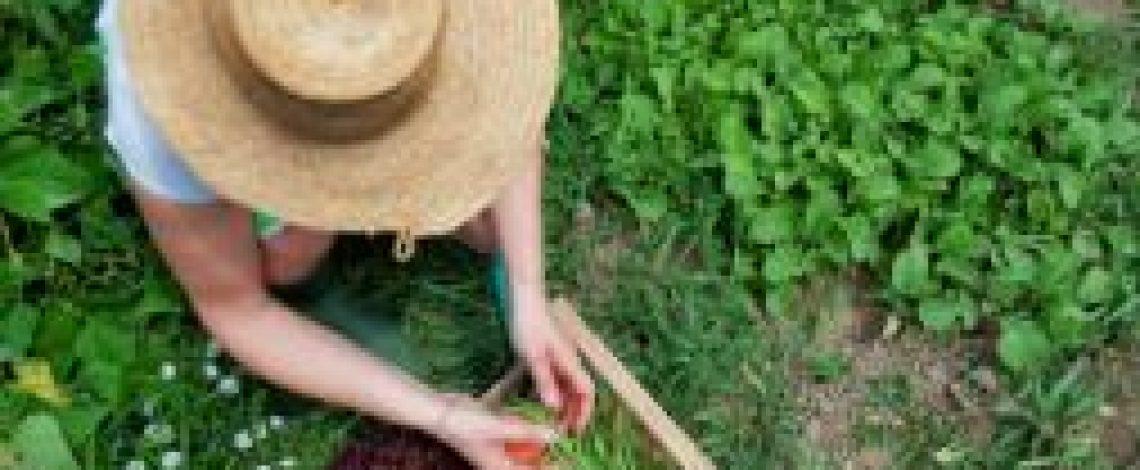 Agricultura orgánica, ecológica o biológica