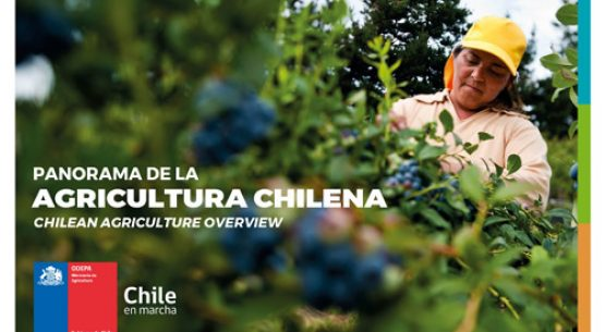 Panorama de la agricultura – Chilean agriculture overview 2019