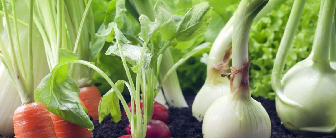 Respecto al valor, en 22% crecieron las exportaciones de hortalizas frescas en enero-octubre de 2019