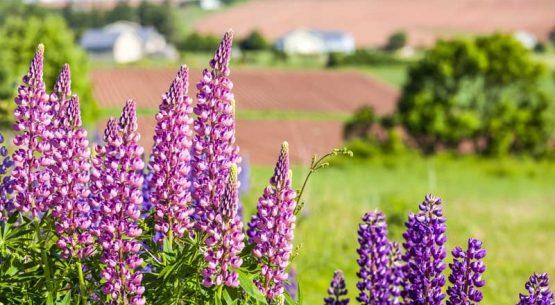 Estudio de Economía Circular en el Sector Agroalimentario Chileno