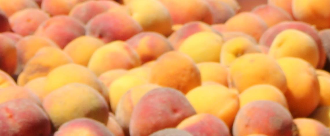 Boletín de fruta. Marzo de 2020