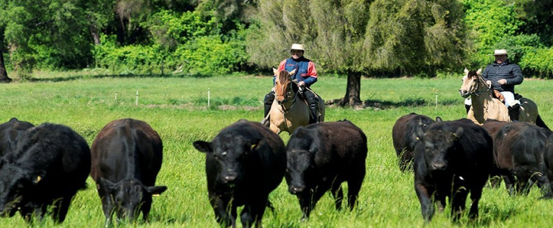 Ciclo ganadero y oferta de carne bovina en Chile, 1980 – 2018: implicancias de política