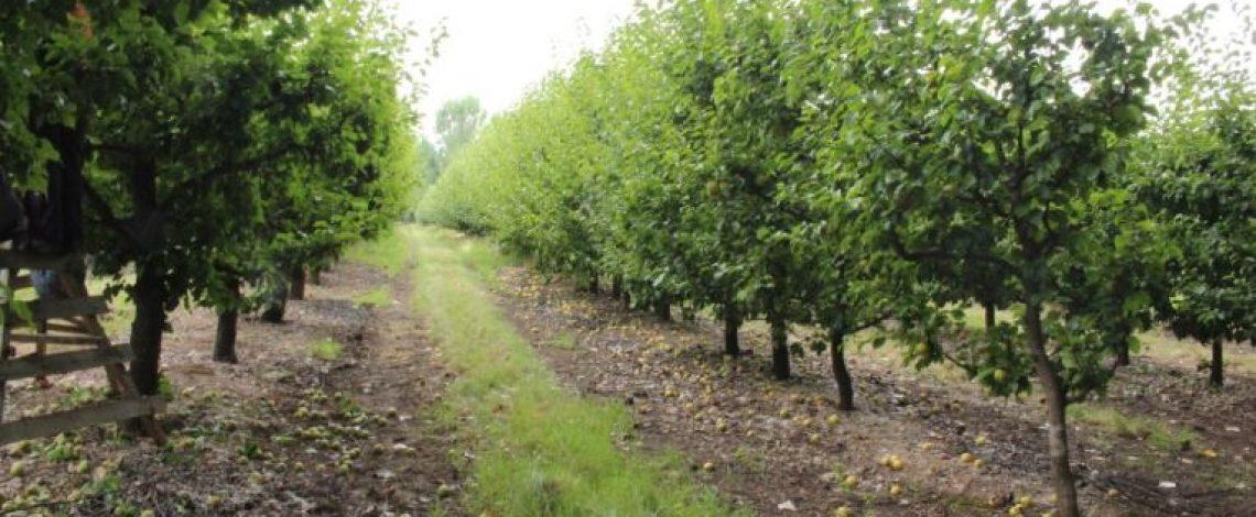 Seminario Fruticultura Sustentable: desafíos y oportunidades para la Agricultura Familiar Campesina