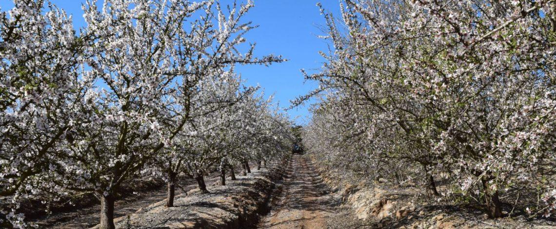 Investigación en cultivos de almendro, cerezo y palto: Proyecto apuesta por armonizar una mayor biodiversidad de plantas y abejas nativas con la productividad de huertos comerciales de la RM