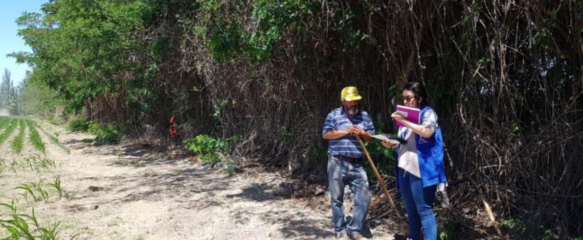 Odepa e INE abren opción de responder online el Censo Agropecuario y Forestal a todos los productores silvoagropecuarios