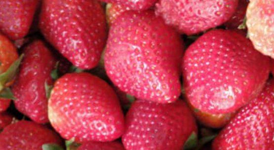 Boletín de fruta, enero 2021