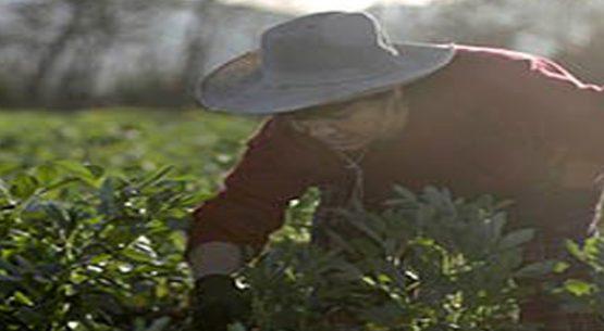 Economía circular: un camino para la sustentabilidad agrícola